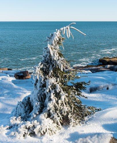 Storm Tree.jpg