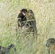 Baboon Family 2.jpg