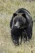Bear002.jpg