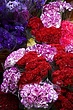 Bird . Flower Market 2.jpg