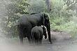 Elephant 2.jpg