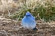 Bluebird-Mountain-17-FJBergquist.jpg
