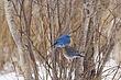 Bluebird-Mountain-21-FJBergquist.jpg