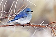 Bluebird-Mountain-36-FJBergquist.jpg