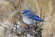 Bluebird-Mountain-50-FJBergquist.jpg