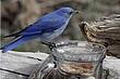 Bluebird-Mountain-56-FJBergquist.jpg