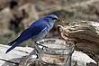 Bluebird-Mountain-58-FJBergquist.jpg