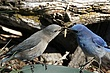 Bluebird-Mountain-59-FJBergquist.jpg