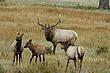 Elk-Rk-Mt-059-FJBergquist.jpg