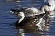 Goose-Snow-28-FJBergquist.jpg