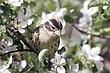 Grosbeak-Rose-breasted--14-FJBergquist.jpg