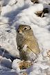 Ground-Squirrel-Wyoming-004-FJBergquist.jpg