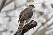 Hawk-Coopers-05-FJBergquist.jpg