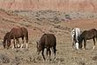 Horses-Wild-002-FJBergquist.jpg