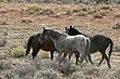 Horses-Wild-008-FJBergquist.jpg
