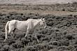 Horses-Wild-010-FJBergquist.jpg