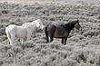 Horses-Wild-011-FJBergquist.jpg