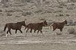 Horses-Wild-014-FJBergquist.jpg