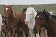 Horses-Wild-017-FJBergquist.jpg