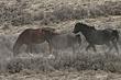 Horses-Wild-024-FJBergquist.jpg
