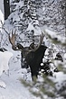 Moose-Wyoming-006-FJBergquist.jpg