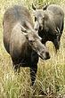 Moose-Wyoming-034-FJBergquist.jpg