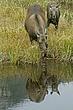 Moose-Wyoming-054-FJBergquist.jpg