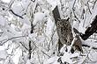 Owl-Great-horned-008-FJBergquist.jpg