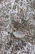 Sparrow-Fox-004-FJBergquist.jpg