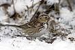 Sparrow-Harris-001-FJBergquist.jpg