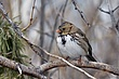 Sparrow-Harris-002-FJBergquist.jpg