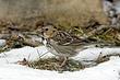 Sparrow-Harris-003-FJBergquist.jpg