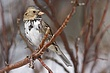 Sparrow-Harris-004-FJBergquist.jpg