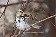 Sparrow-Harris-005-FJBergquist.jpg
