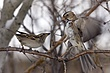 Sparrow-Harris-006-FJBergquist.jpg