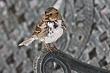 Sparrow-Harris-007-FJBergquist.jpg