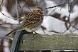 Sparrow-Harris-008-FJBergquist.jpg