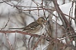 Sparrow-Harris-012-FJBergquist.jpg