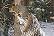 Squirrel-Fox-005-FJBergquist.jpg
