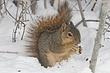 Squirrel-Fox-013-FJBergquist.jpg