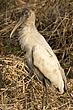 Stork-Wood-009-FJBergquist.jpg