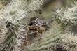 Wren-Cactus--013-FJBergquist.jpg