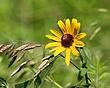Field Colors         NFP  s.jpg