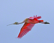 On Morning Wings          NFP  s.jpg
