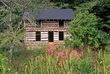 3E23 Mathais Cabin Joe Pye Weed.jpg