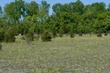 D19M10 Lakeside Daisy State Nature Preserve.jpg