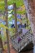 D30A-64-Brandywine Falls.jpg