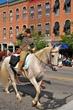 D35T-259-All Horse Parade.jpg