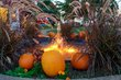 FX23D-305-Fall Mums and Pumpkins Festival.jpg