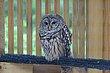 FX85A-9-Glen Helen Nature Preserve.jpg